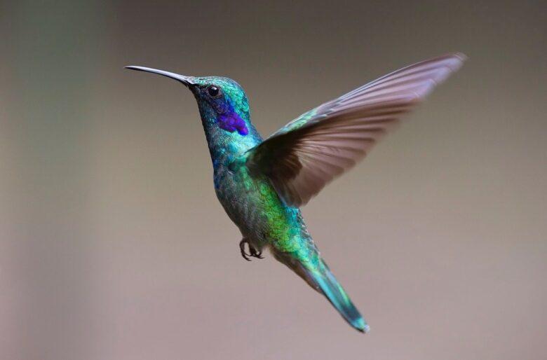 Koliber – nowy algorytm od Google